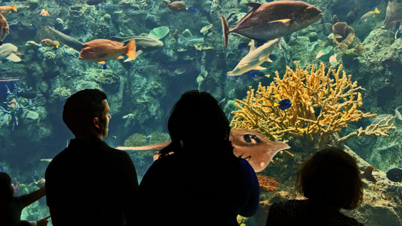creating a sustainable waste management plan for the aquarium of the pacific