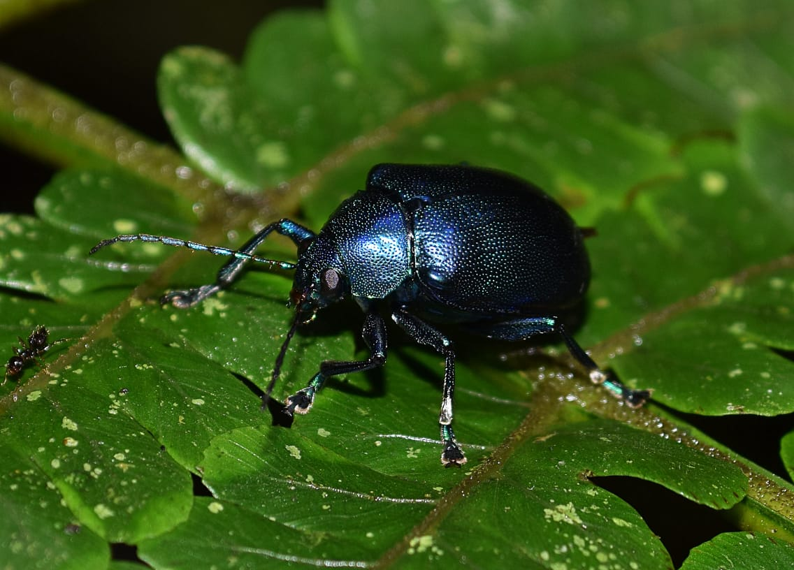 study reveals which outdoor lighting minimizes harm to insects