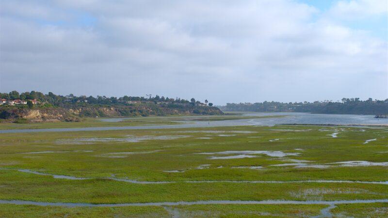 human wastewater is feeding harmful algae blooms off of southern california's coast