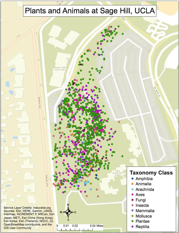 map of iNaturalist observations at sage hill