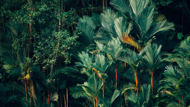 tropical forest in Indonesia