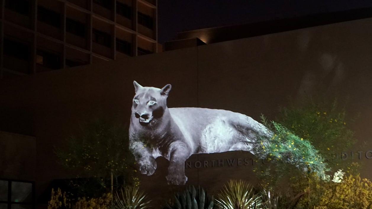 culturesbiodiversity_animal_land_mountain_lion