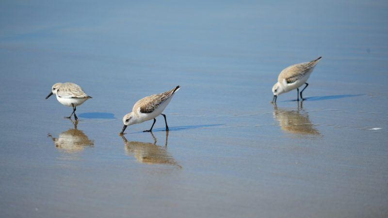 california conservation genomics initiative