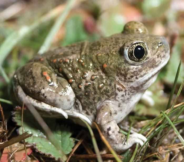 new book co-authored by brad shaffer covers conservation risks faced by sensitive california species