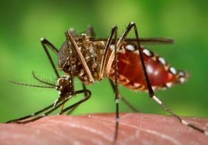 rainfall can indicate that mosquito-borne epidemics will occur weeks later