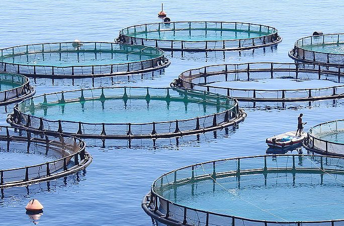 fish-farm-hero-crop