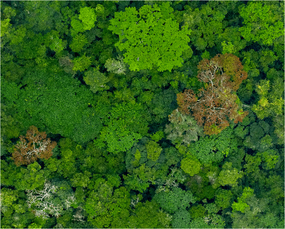 Picture of Congo rainforest canopy from above.