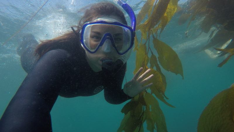 impacts of kelp forests on ocean acidification in santa monica bay