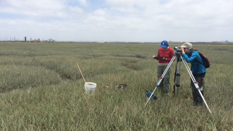 managing sea level rise in coastal wetlands