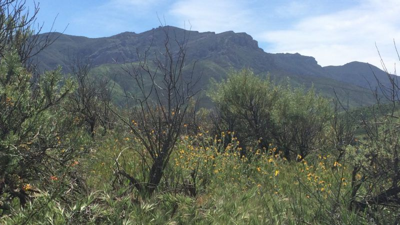 ecological impacts of nitrogen deposition on coastal sage scrub of the santa monica mountains