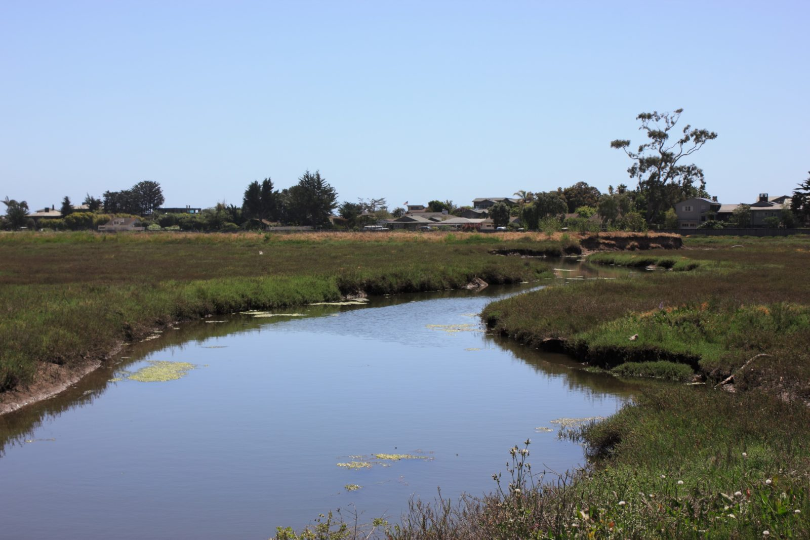 Carpinteria Salt Marsh Reserve, Carpinteria, CA