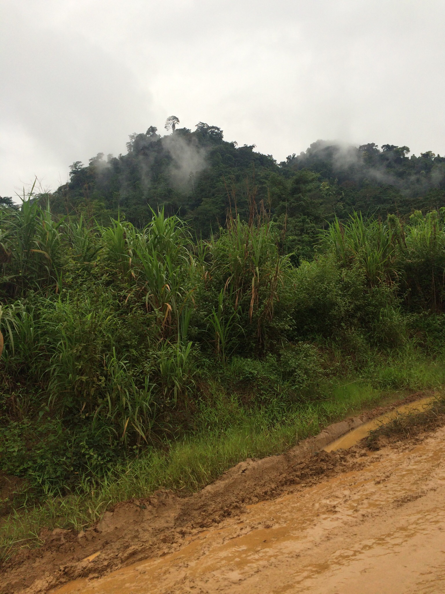 Intact section of rainforest in Cameroon.