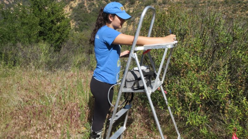drought influence on chlorophyll fluorescence in evergreen and deciduous plant species of southern california