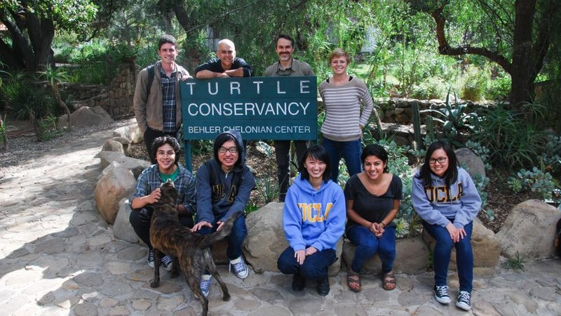 reintroducing threatened western pond turtles into southern california ecosystems