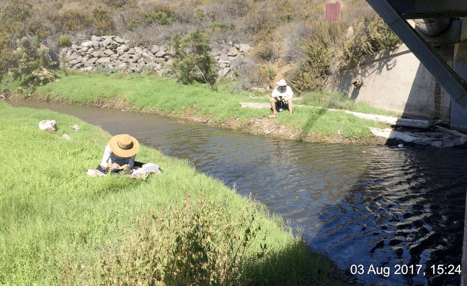 post-fire impact on biological community of coastal lagoons in southern california