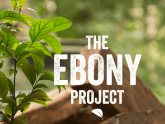 the ebony project