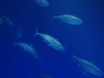 will farmed fish save our oceans, delight our palates, and provide healthy food for all?