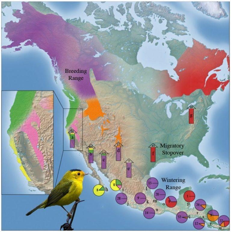 Figure 1B: Genoscape of Wilson's Warbler