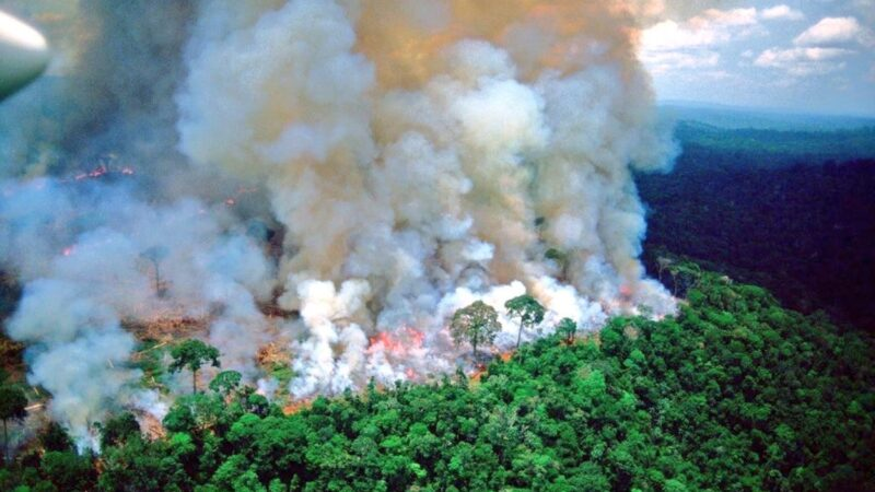 homegrown fire prevention could save amazon rainforest