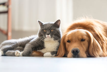 study gives pet lovers paws