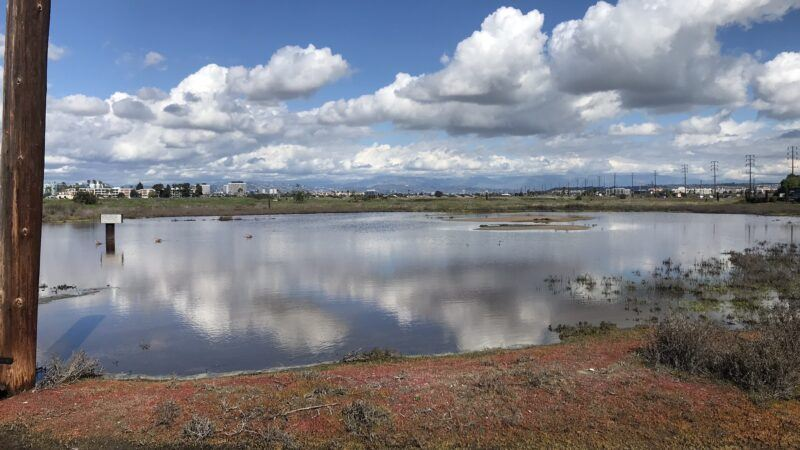 restoration clash over ballona wetlands shows importance of nature in urban areas