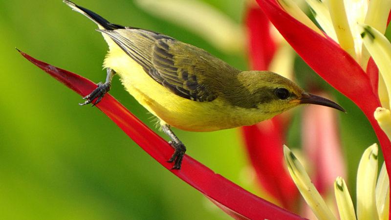 Bird Genoscape Project
