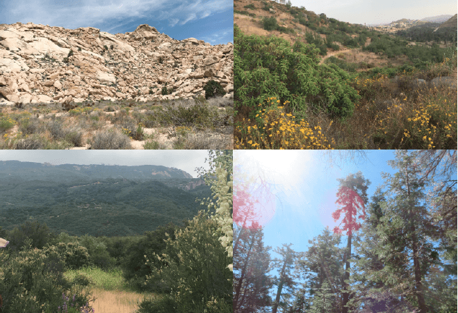 toward a conservation physiology of californian flora: assessing drought vulnerability across species and ecosystems