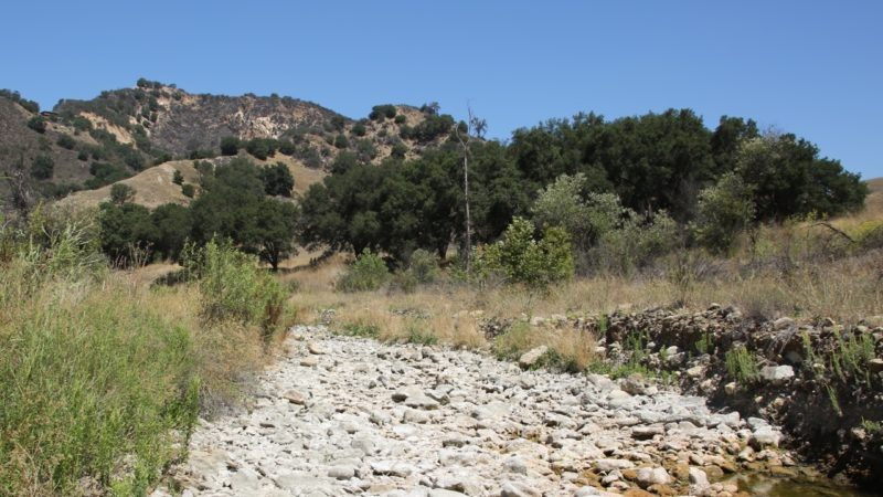 collaboration: how do chaparral shrubs respond to and recover from heat waves?
