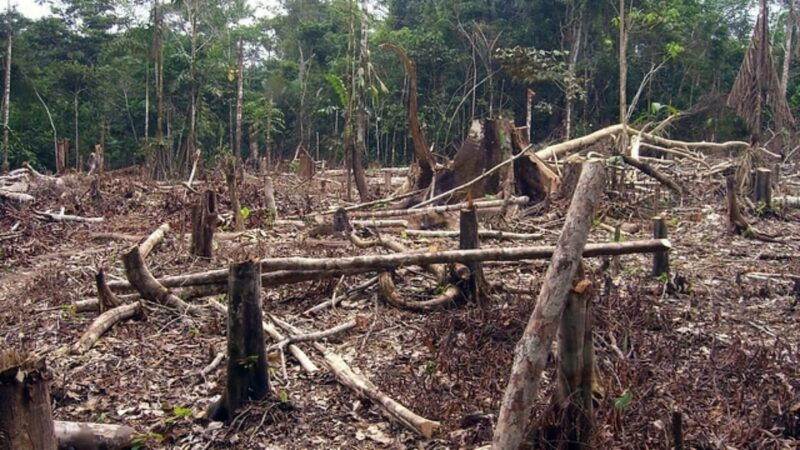 deforestation surged following end of armed conflict in colombia