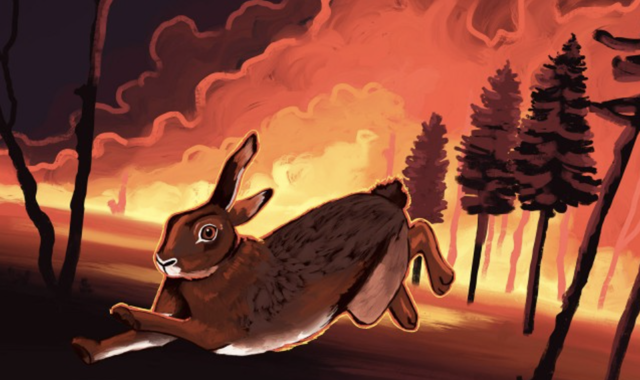 campus queries: what is the impact of wildfires on wildlife in california?