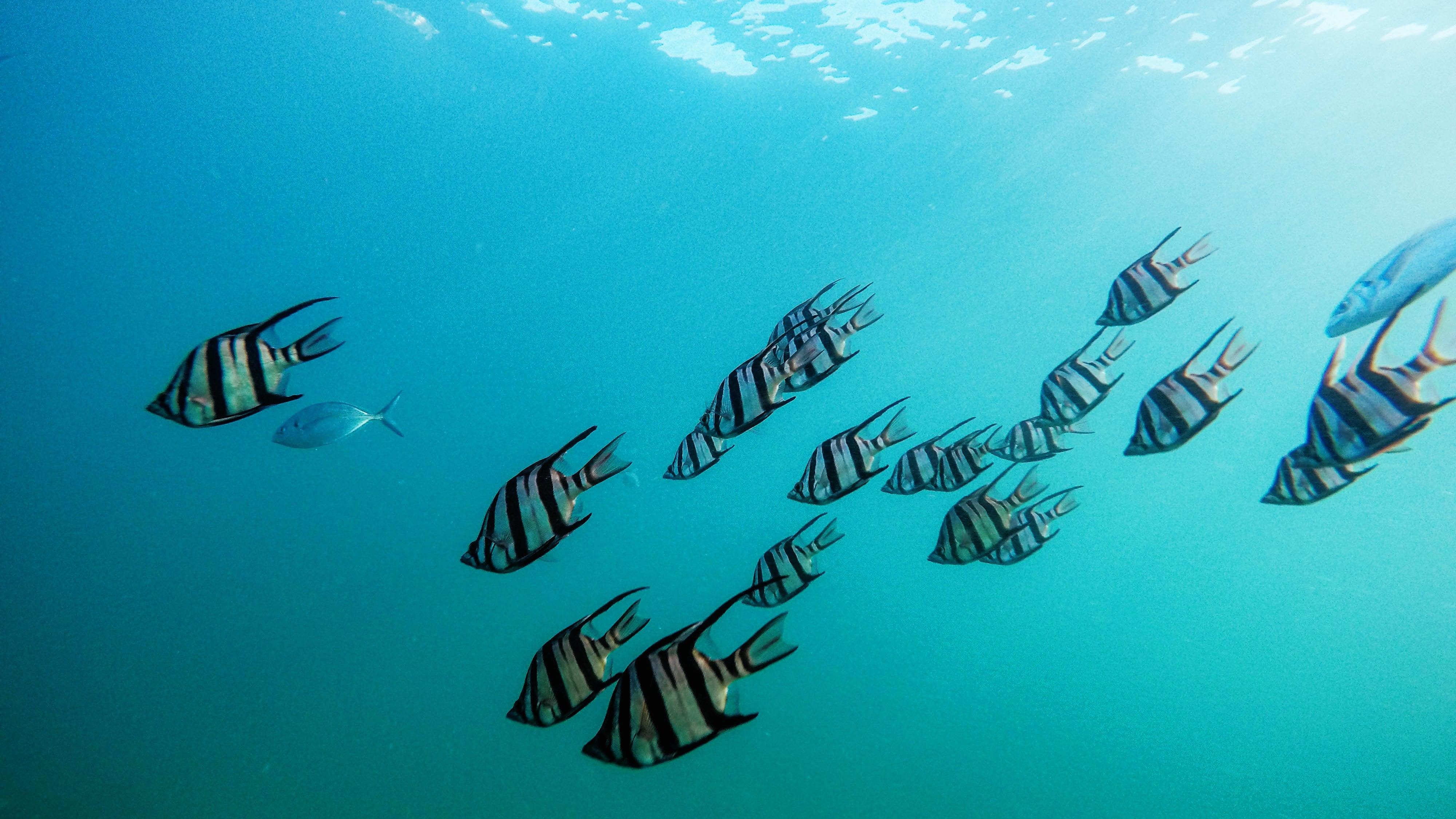 tonga aquaculture resources