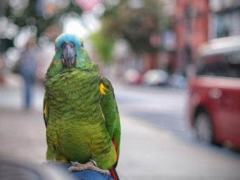 to save endangered species, should we bring them into our cities?