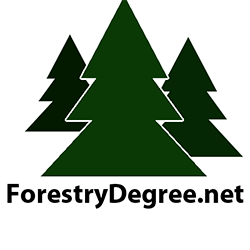 Forestry Degree