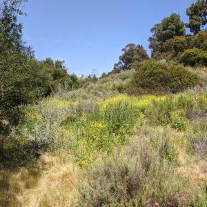 hillside of native plants