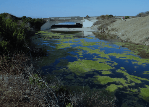 characterizing lagoon biodiversity in southern california using environmental dna
