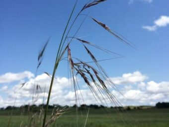 native grasslands restoration study
