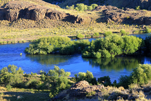 preserving patagonia: mitigating the impact of invasive willows
