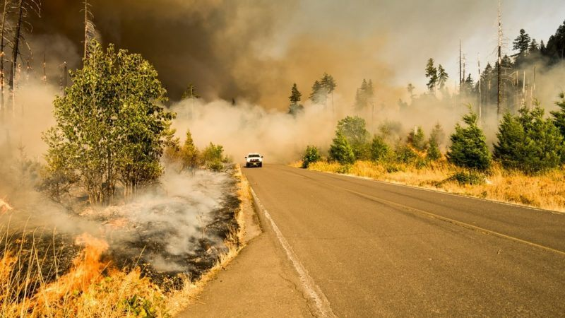 how wildfire will shape our future