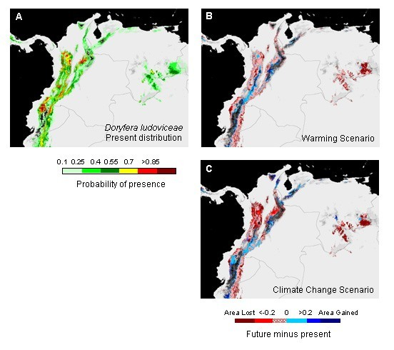 Impact of climate change on the geographic distribution of hummingbirds in the Northern Andes