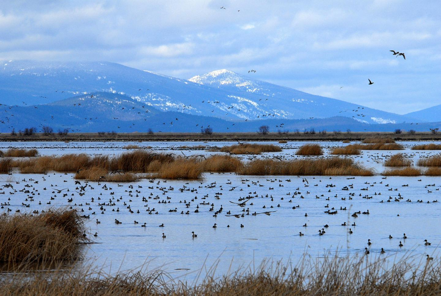 wetlands in california and oregon could disappear with sea level rise