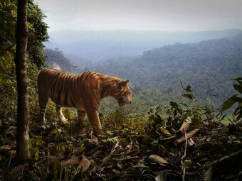 from tigers to trees – ctr seminar with matthew scott luskin