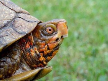 smithsonian magazine: surprising reason the turtle learned to hide its head