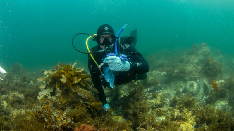 citizen scientist's message in a bottle: rapid edna assessments of marine biodiversity to evaluate the effectiveness of los angeles' marine protected areas