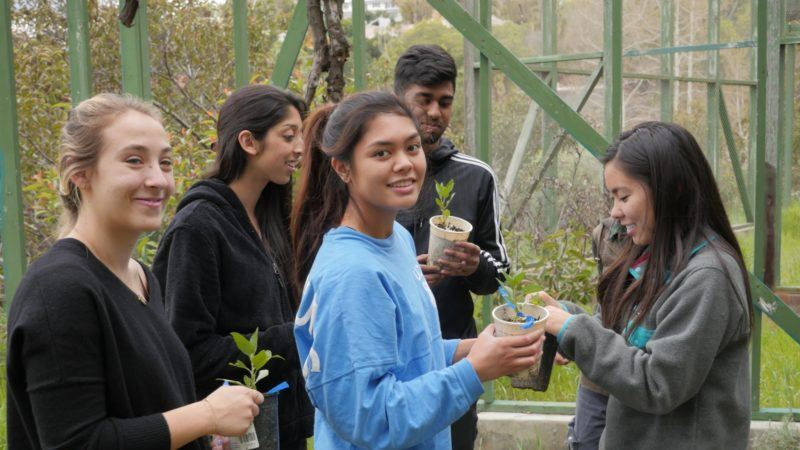 Catangay plants native trees at Sage Hill with a UCLA student group.