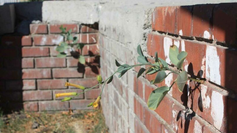 street plants: wild flora of los angeles