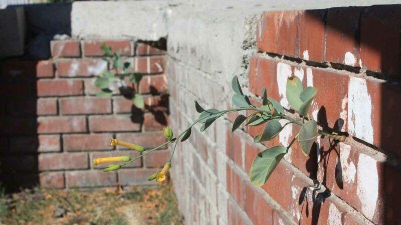 street plants: wild flora of los angeles