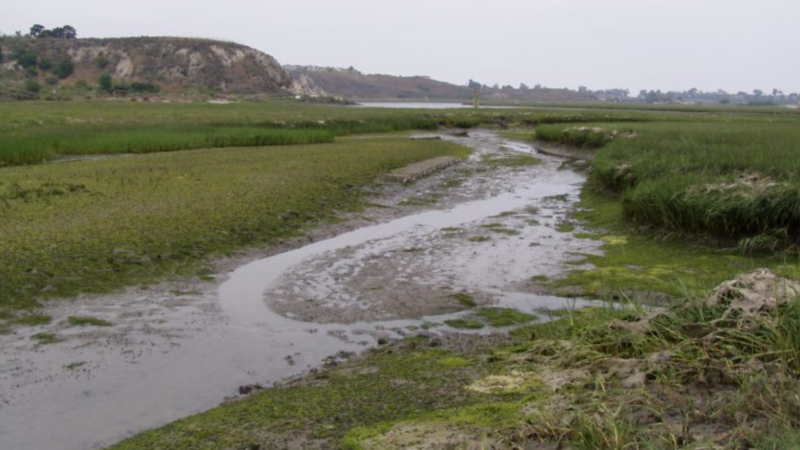 "does eutrophication first drive ""basification"" then acidification in california estuaries?"